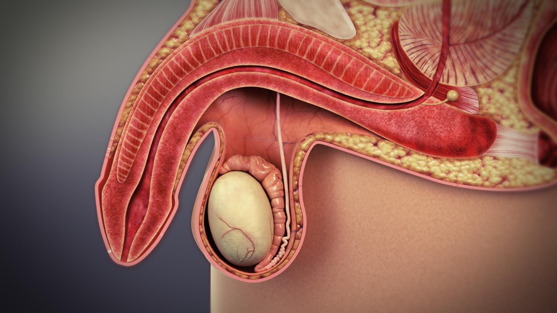 BNO – Az urogenitális rendszer megbetegedései – Wikipédia