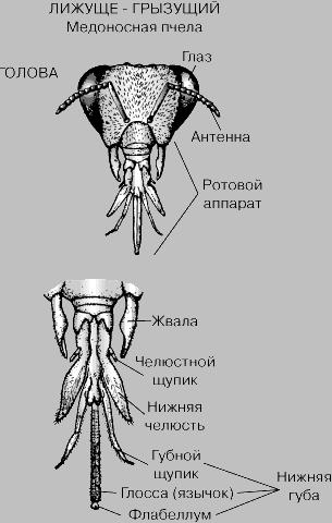 alak hossza pénisz vastagsága)