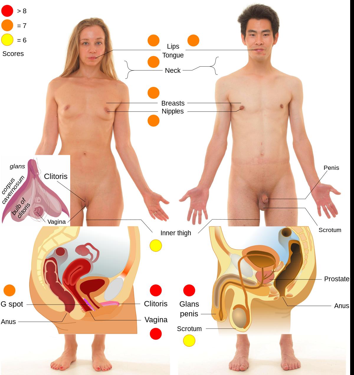 szokatlan női pénisz