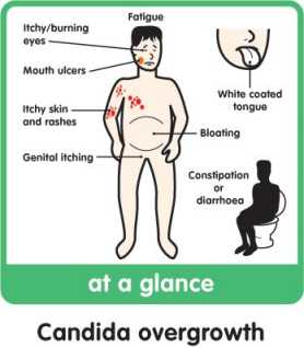 colibacillus és pénisz)