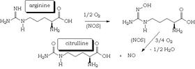 erekció nitrogén-oxid