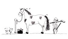ló pénisz hossza)