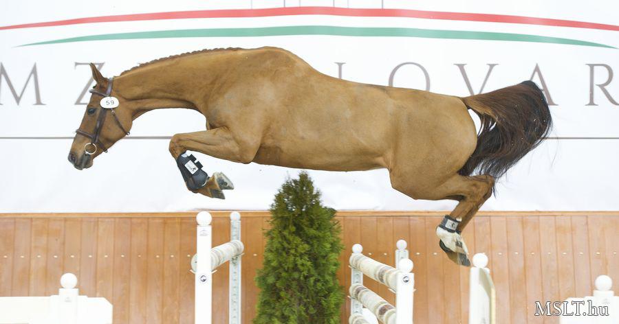 ló felállítása