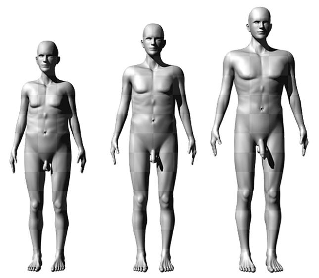 a magasabb férfiaknak nagyobb a péniszük)