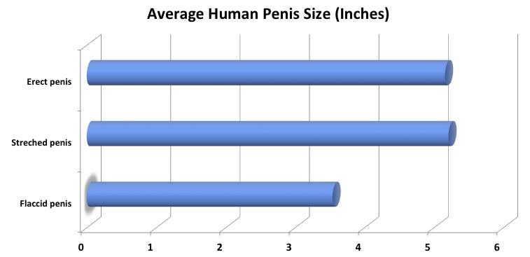 a normális pénisz megjelenése