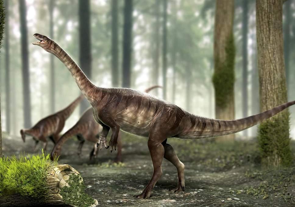 dinoszaurusz pénisz