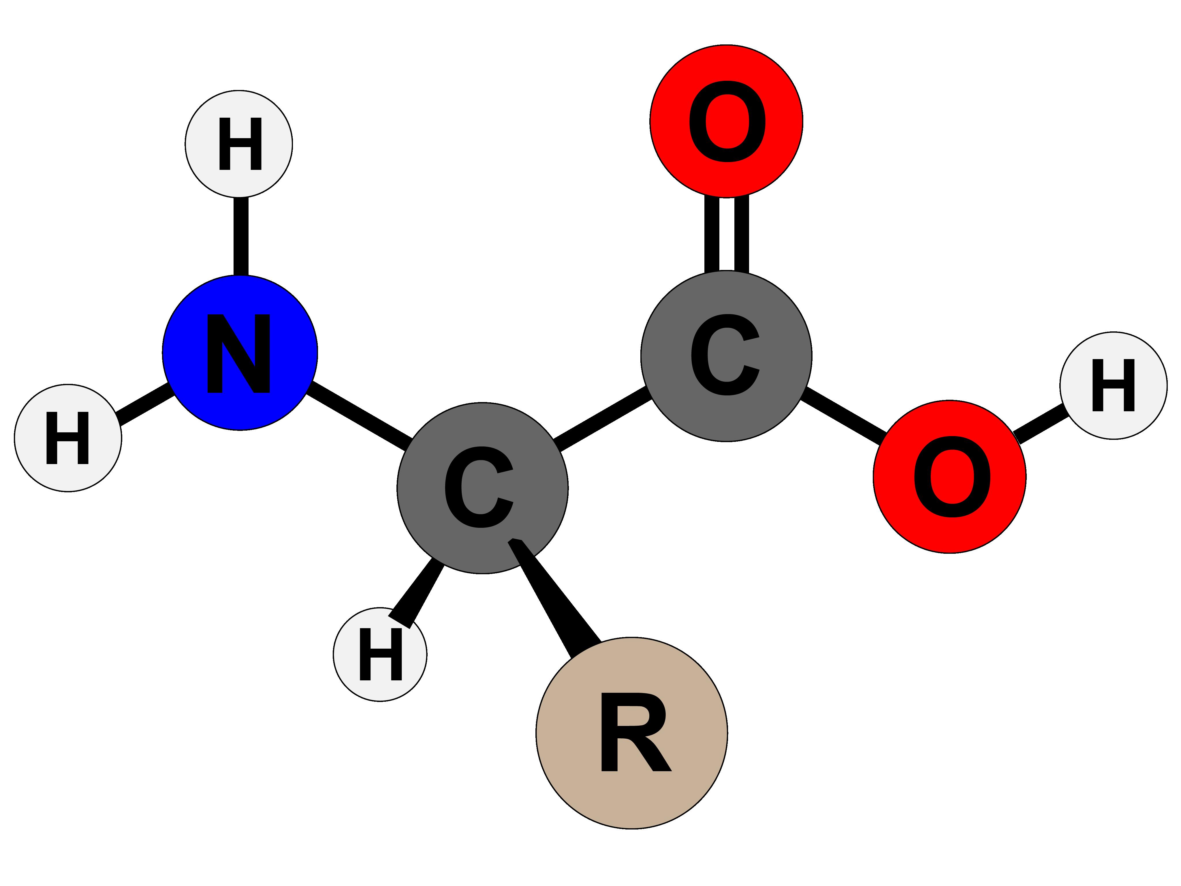 aminosavak az erekcióhoz)