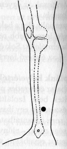 masszázs pontok az erekció fokozása érdekében