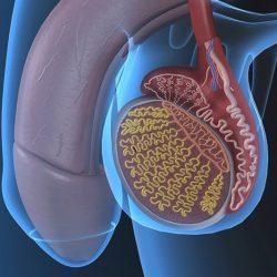 károsodott erekció a prosztatagyulladás miatt)