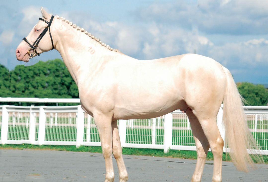 ló felállítása)