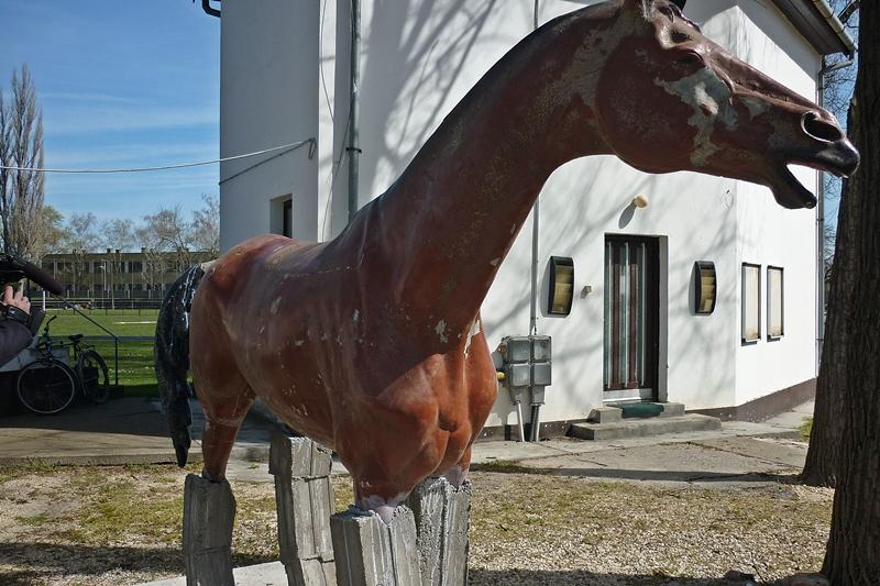 A ló mozgásformái – Wikipédia
