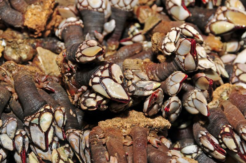 csokoládé péniszek