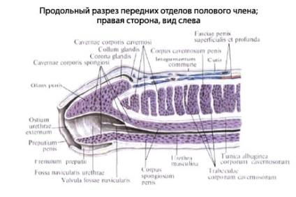 óvszer felvétele után az erekció leesik