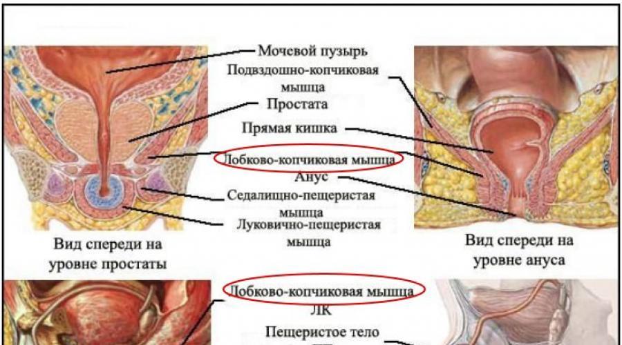 erekció a bélmozgások során)