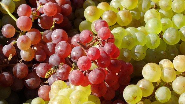 szőlő és erekció